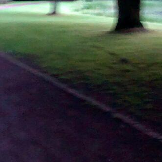Im Schloßpark, spät abends